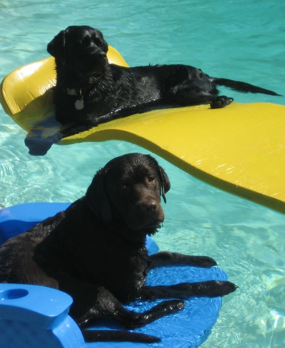 Trek and Cody rafting