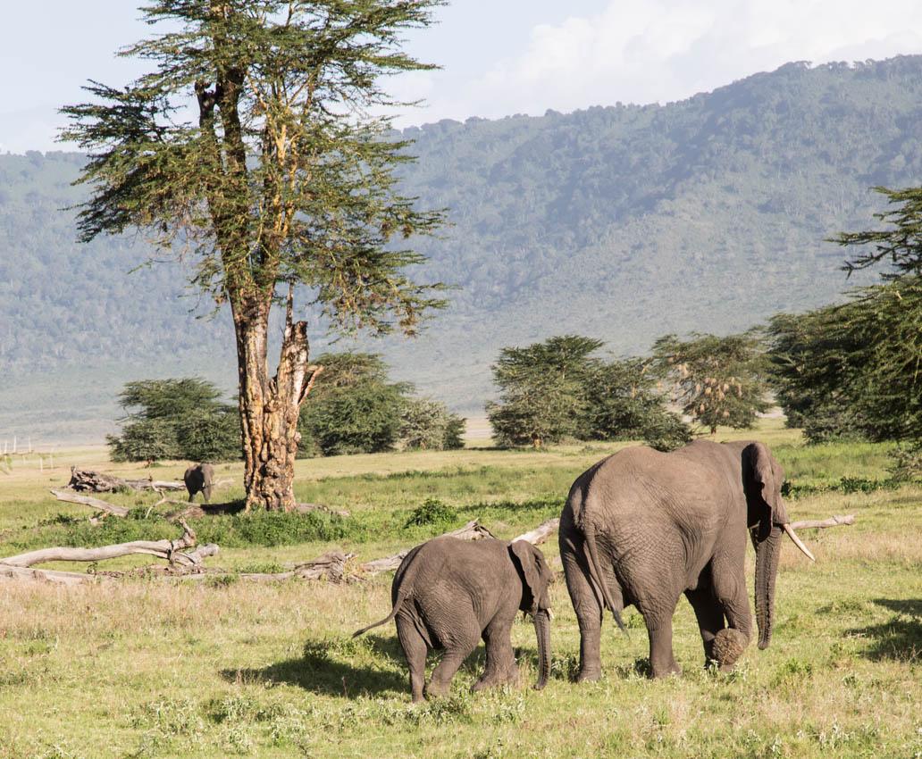 NNgorongoro Crater Mom with baby Elephant