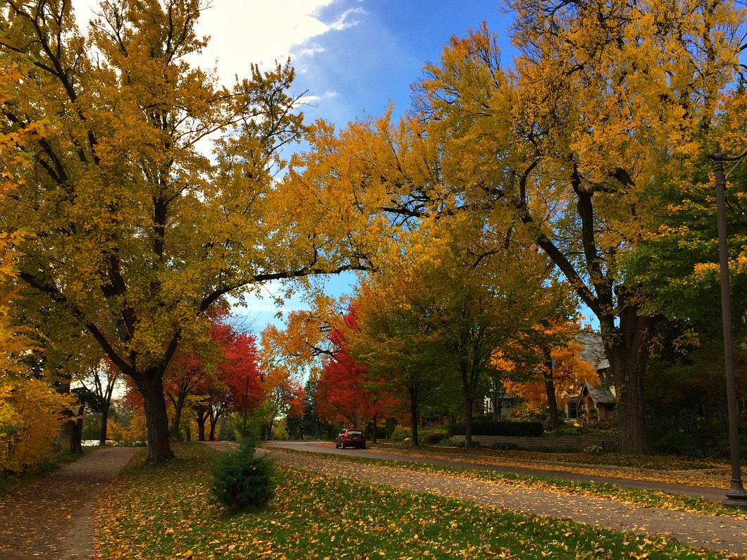 Fall leaves lining the street in yellow, red, and orange